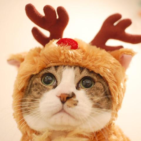 メンリー・クリスマス!
