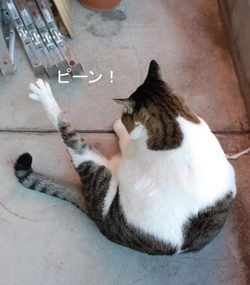 なが〜い足