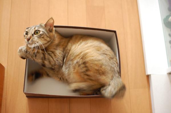 めんまさんと違って、箱で落ち着くわかではなく。。。