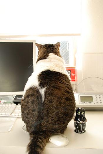 猫の座った姿はマトリョーシカに似てますね。