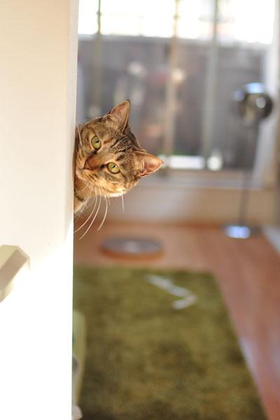 階段途中にsatoが潜んでじゃらし振ってました。