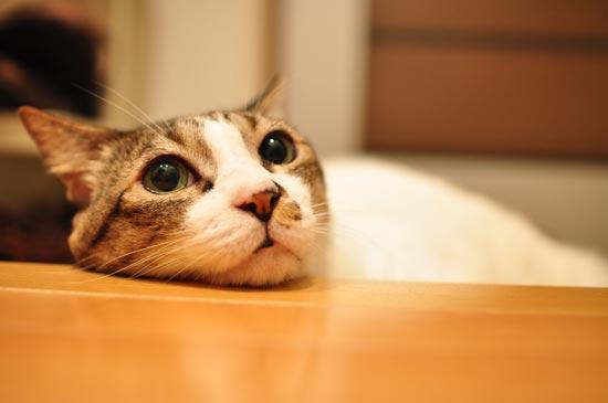 寝床ジプシーなめんまさん。