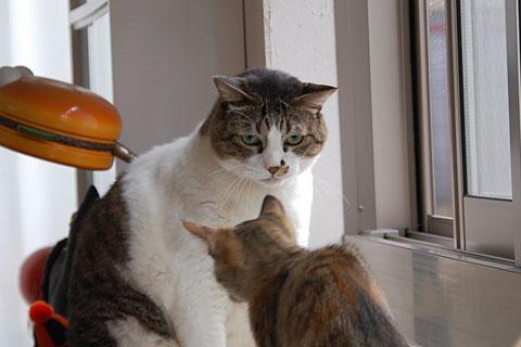 くるるるぅ〜と鳴きながら接近する子猫ちゃん。