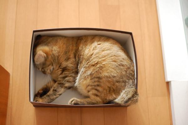 サイズぴったりの箱。