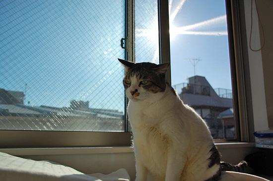 窓が汚い...そろそろ大掃除しないと(^^;)