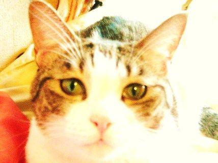 catnico002