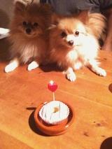 マーレ2歳の誕生日08
