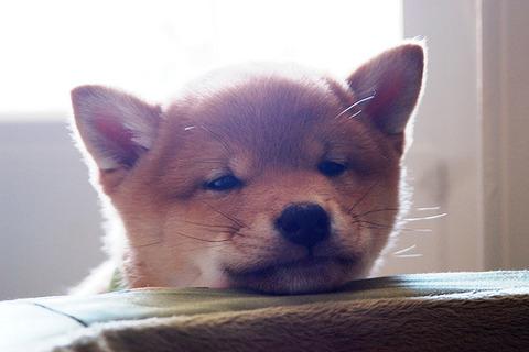 【アメリカ】 犬が赤ちゃんにハイハイの仕方を教える