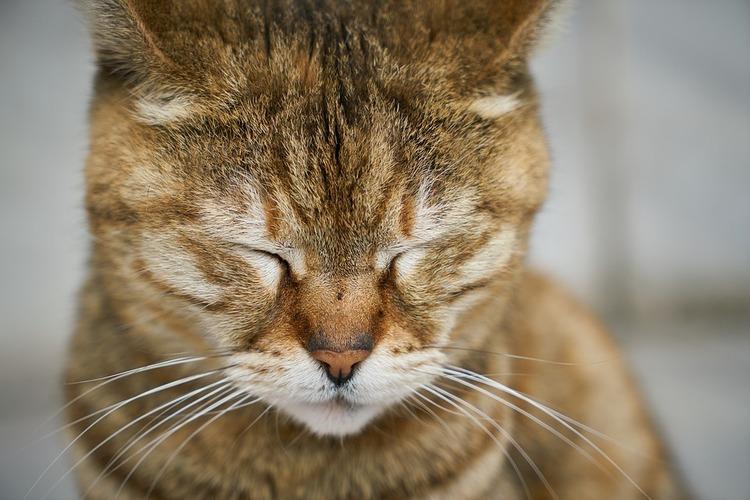 cat-2306705_960_720