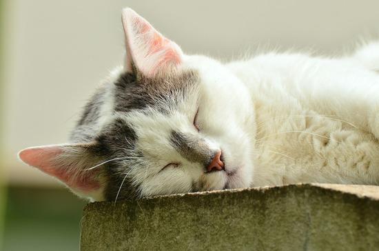 cat-1551794_1280