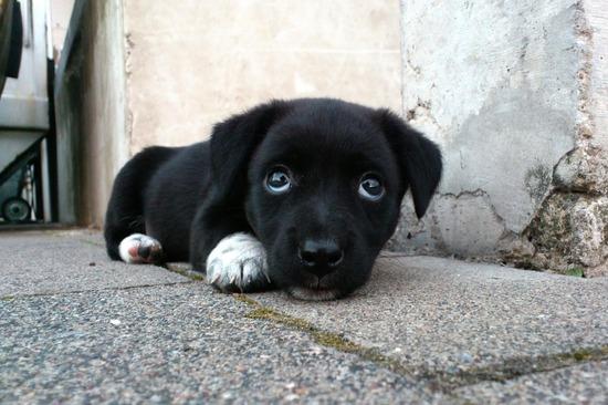 dog-173720_960_720