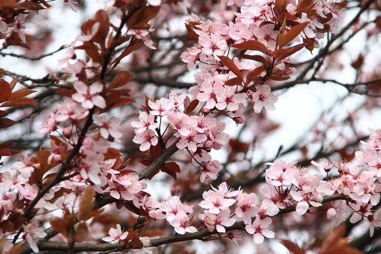 spring-2276402_960_720