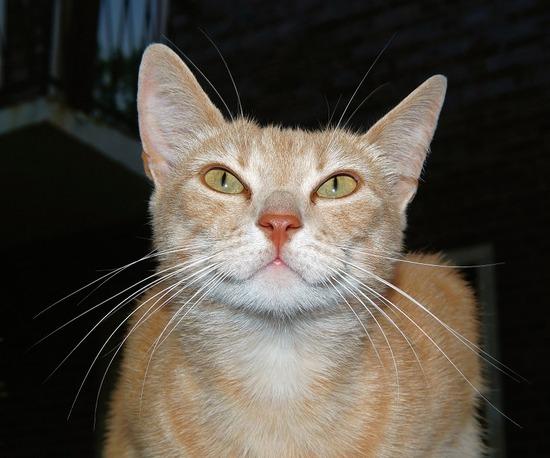 cat-817079_960_720