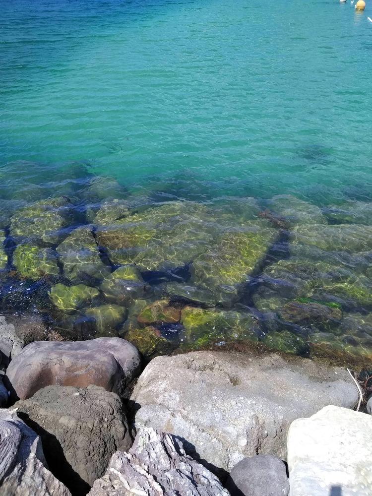 【実況】ザリガニで海釣りをします!
