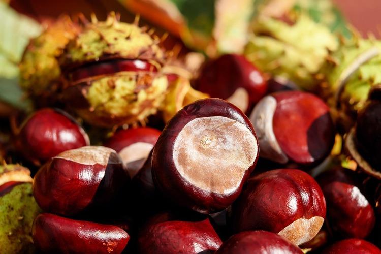 chestnut-1710748_960_720