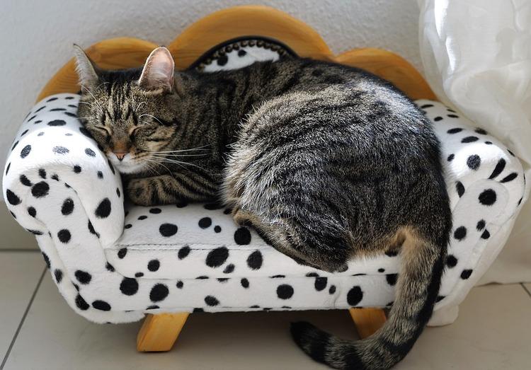 cat-2360849_960_720