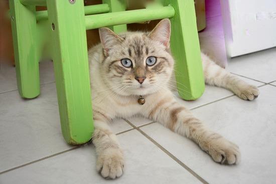 cat-2223224_960_720