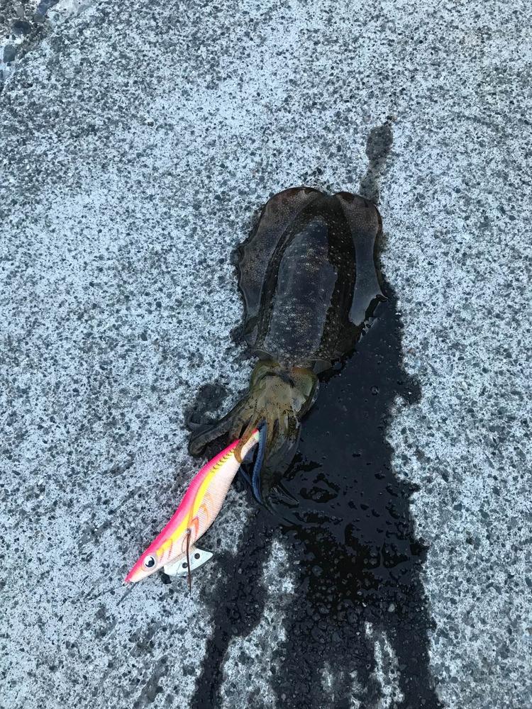 【画像】イカ釣りに来たよー