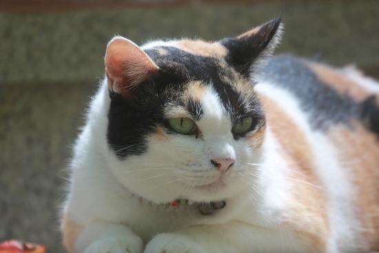 fat-cat-1391358_960_720