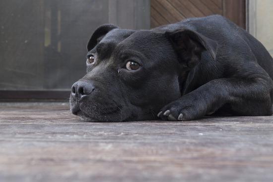 dog-873794_960_720