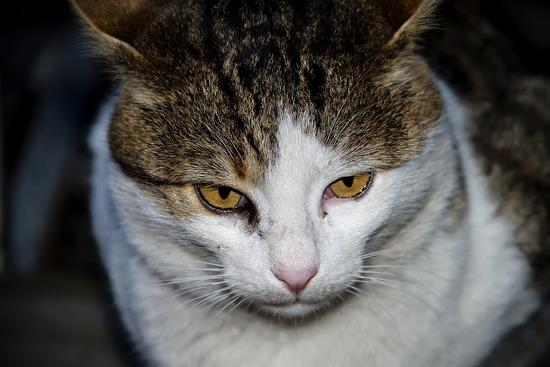 cat-1715716_960_720
