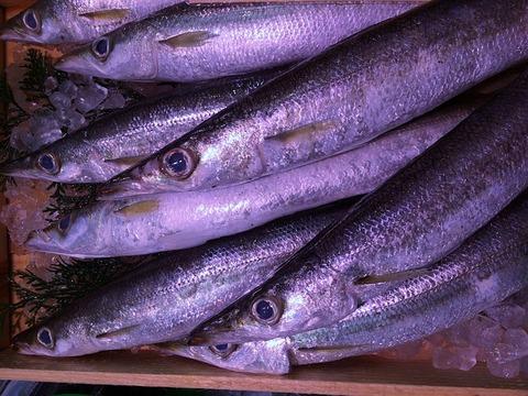 ワイ将、秋刀魚を食べて
