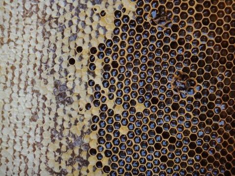 蜂蜜が好きじゃないから今まで