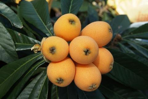 ビワとかいう謎の果実