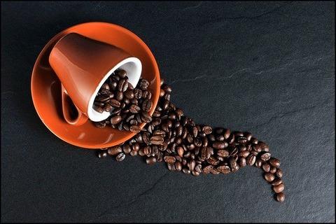 毎日庭にコーヒーかすを撒いて