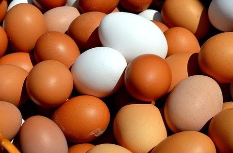 鶏卵「美味いです、安いです、