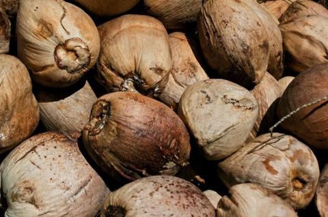 ココナッツにストロー刺して中のジュース