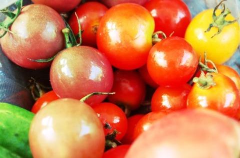 ワイ「トマト嫌い」アホ