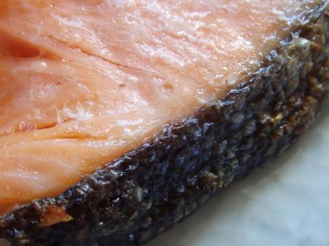 焼きたての激ウマ銀鮭を見せ