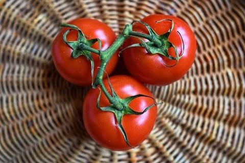 トマト、実が虫に食われると警告の電
