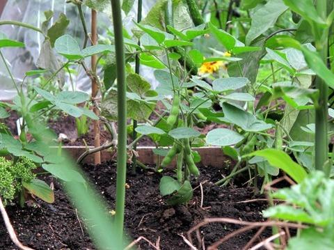 耕作放棄地に植えたら良い野菜