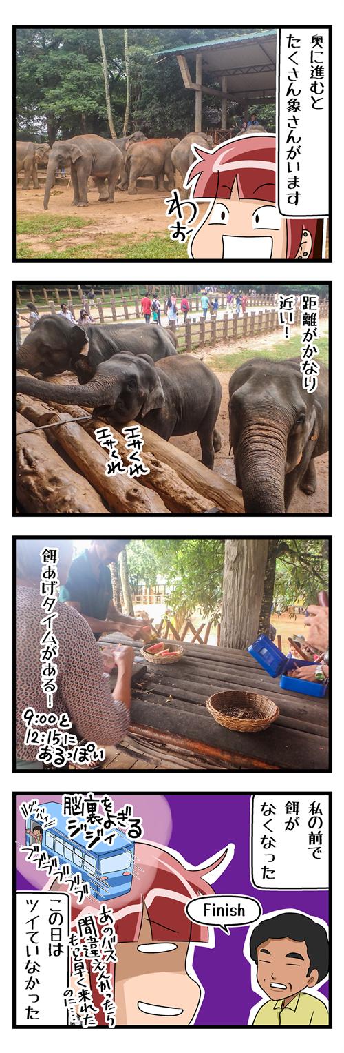 海外旅行Sri Lankaピンナワラ03_R