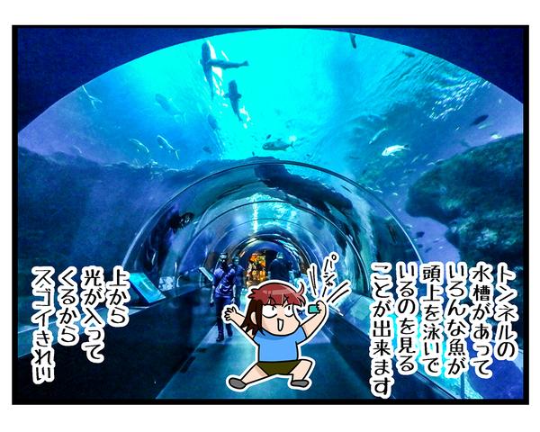海外旅行SINGAPORE★水族館03
