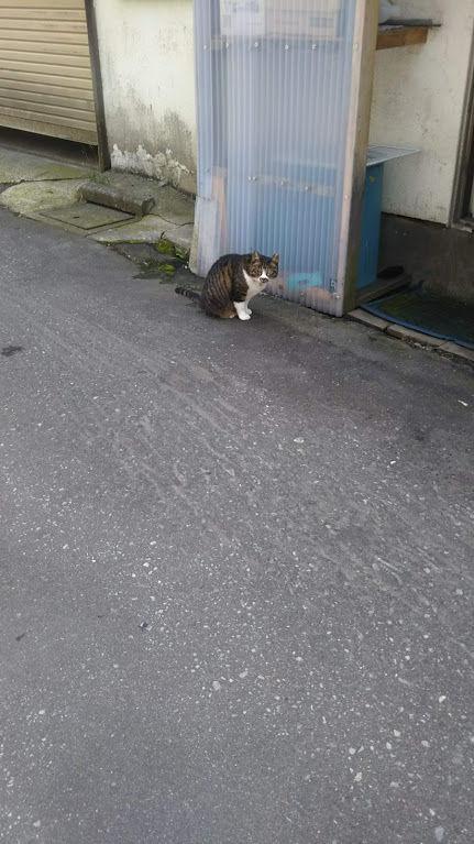 青森、裏路地の猫
