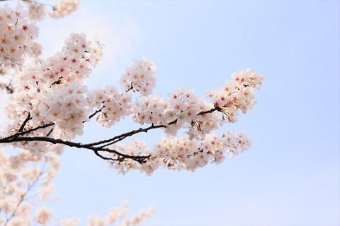 UenoOnshiKouen2014Spring20_R