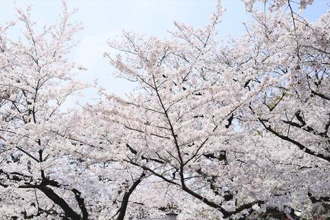 UenoOnshiKouen2014Spring09_R