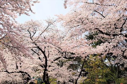 UenoOnshiKouen2014Spring05_R