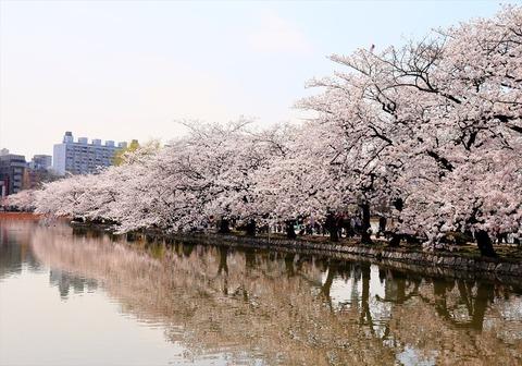 UenoOnshiKouen2014Spring17_R