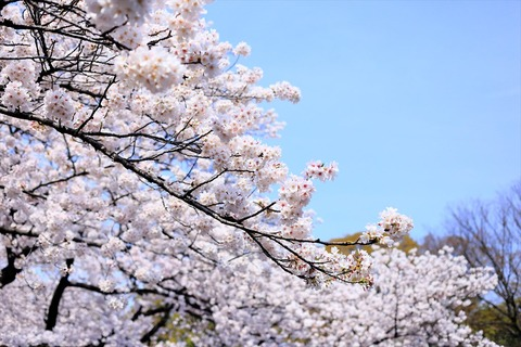 UenoOnshiKouen2014Spring03_R