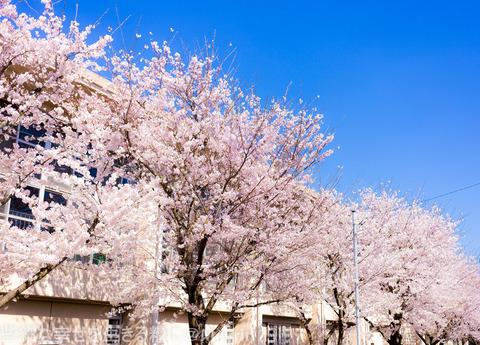 2015年4月桜撮影11