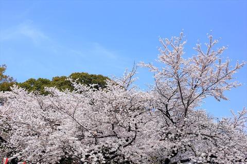 UenoOnshiKouen2014Spring10_R