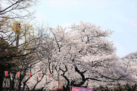 UenoOnshiKouen2014Spring02_R
