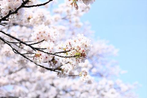 UenoOnshiKouen2014Spring04_R