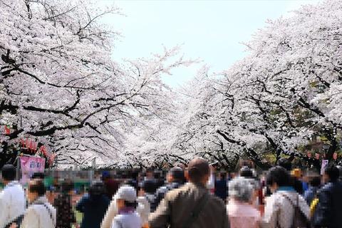 UenoOnshiKouen2014Spring06_R