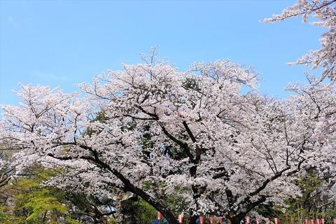 UenoOnshiKouen2014Spring07_R