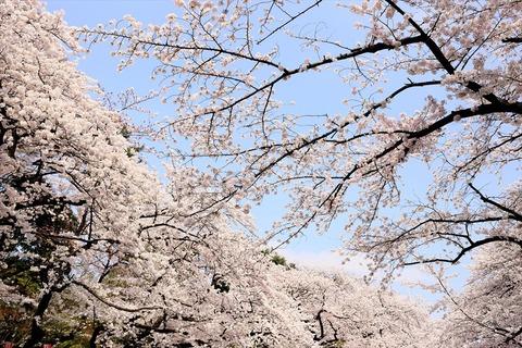 UenoOnshiKouen2014Spring08_R